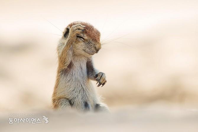 (c)Yuzuru Masuda/Comedy Wildlife Photography Awards 제공